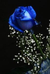 http://banmaihong.files.wordpress.com/2011/03/blue_rose.jpg?w=204&h=300