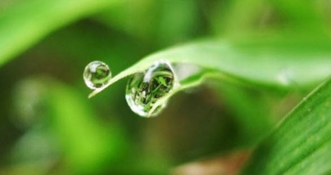 Beautiful Examples of DEW DROPs Photography