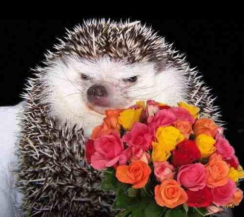 Hedgehog and flowers