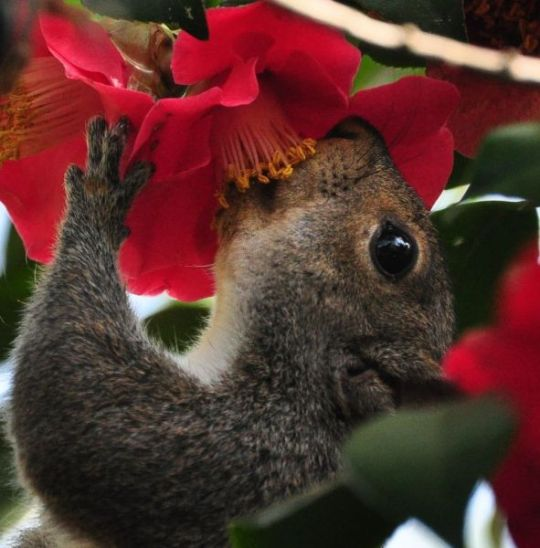 Squirrel and flower