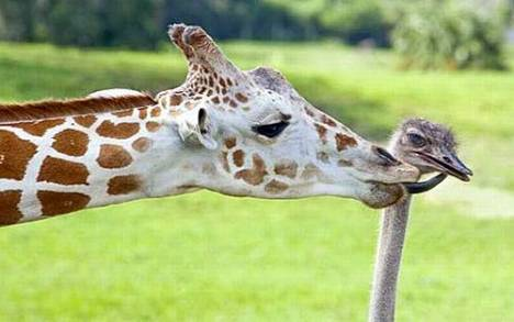 https://banmaihong.files.wordpress.com/2014/02/5b1c9-friends_animals_15.jpg