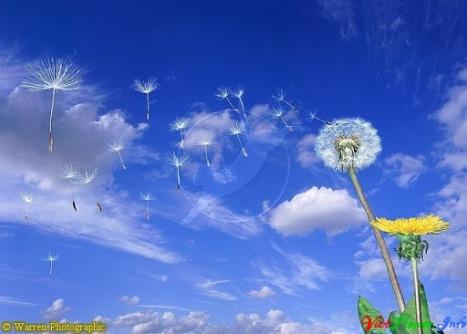 https://banmaihong.files.wordpress.com/2014/09/f8561-vietflower-info-hoa_bo_cong_anh_2.jpg