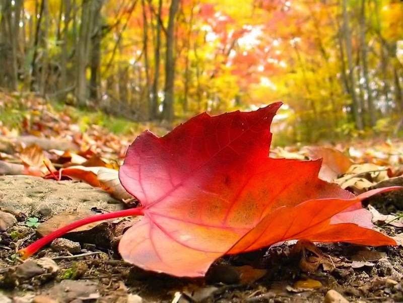 https://banmaihong.files.wordpress.com/2014/10/6d6c4-autumn2bfalling2bleaf.jpg