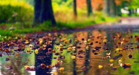 https://banmaihong.files.wordpress.com/2015/03/f72ac-autumn-rain.jpg