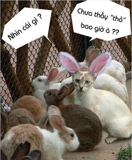 Thỏ vui, hài hước
