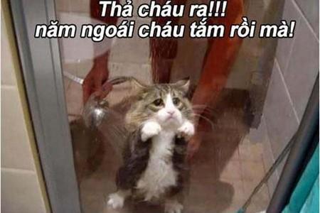 Mèo đi tắm