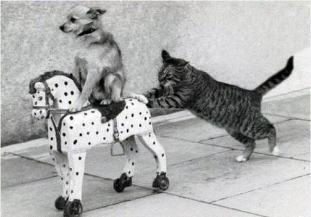Chó mèo vui