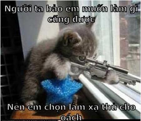 Mèo làm xạ thủ