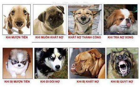 Hình chó vui cười đau bụng
