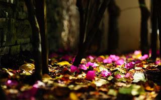 https://banmaihong.files.wordpress.com/2015/12/05a32-pink_flowers_fallen.jpg