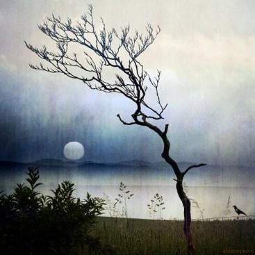 https://banmaihong.files.wordpress.com/2017/07/369f4-4238161033-stillness-of-nature.jpg
