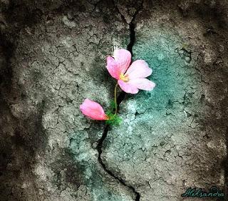 https://banmaihong.files.wordpress.com/2017/07/98d46-flower-crack-wall.jpg