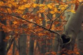 Bình An Nội Tâm - Cân Bằng Cuộc Sống 1d06f-autumn2bbranches