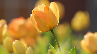 86868-flower
