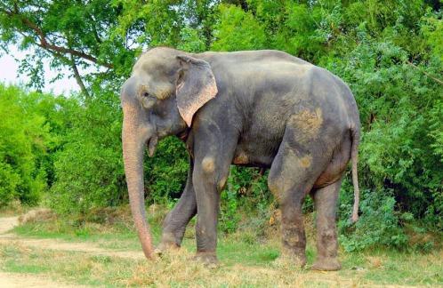 Kết quả hình ảnh cho raju elephant